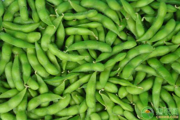 辣椒炒毛豆的营养价值,挑选毛豆的技巧