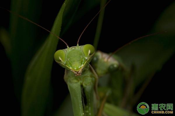 昆虫的有益表现方面