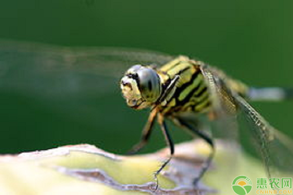 昆虫的有益表现在哪里