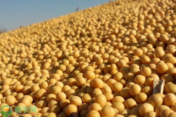 开白花的大豆品种有哪些