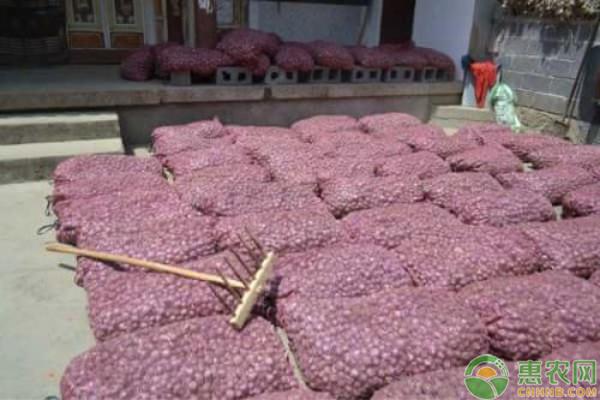 今日大蒜价格多少钱一斤?2019年10月份全国大蒜价格行情