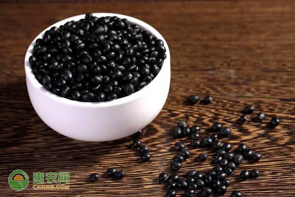 黑毛豆的营养价值介绍