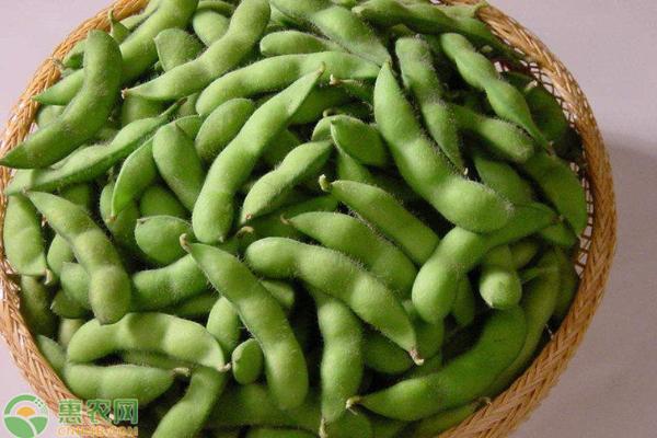 毛豆价格多少钱一斤