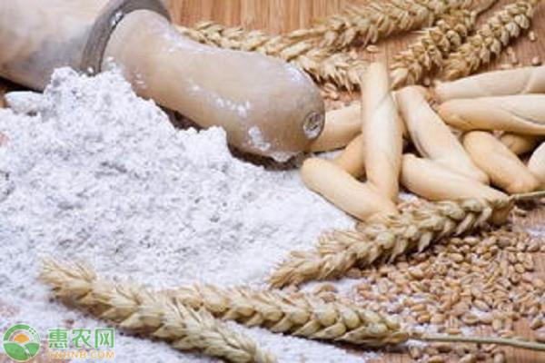 全国面粉价格最新行情预测