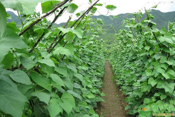 有机蔬菜的高效种植方法