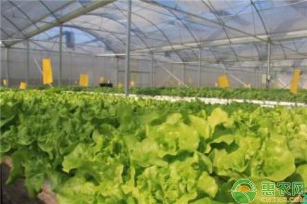 冬季蔬菜种植要点及注意事项