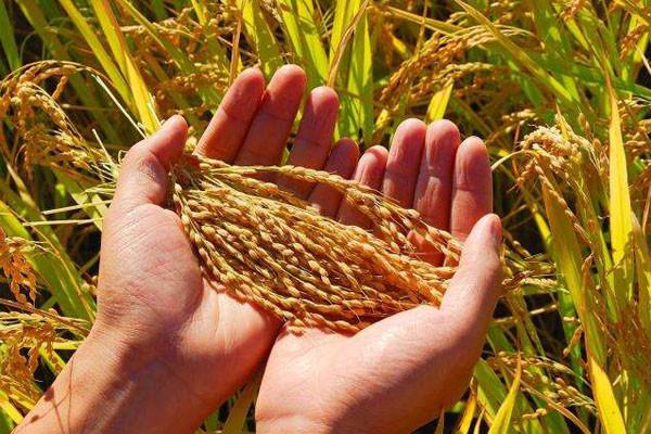 粮食价格低迷,农民认为必须涨,非农居民说不能涨!
