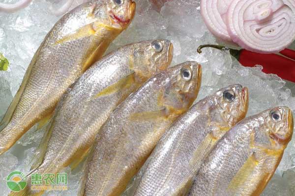 冷冻黄花鱼多少钱一斤?