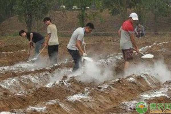 生石灰对农业生产有什么作用?都有哪些注意事项?