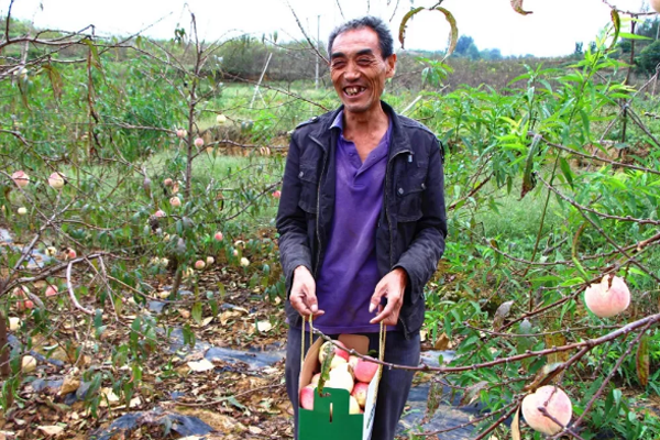60岁老农创业种植冬桃,成村民致富带头人!