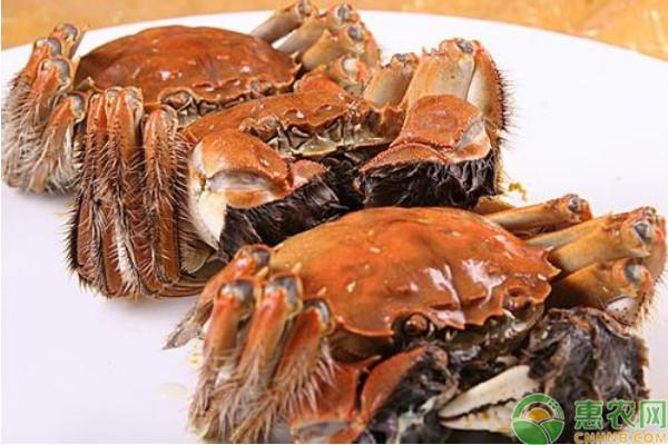 常识:你知道螃蟹到底有几条腿吗?(附常见螃蟹种类)