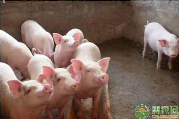 养猪户发现猪呕吐,通常是这六种情况!
