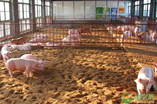 发酵床养猪管理