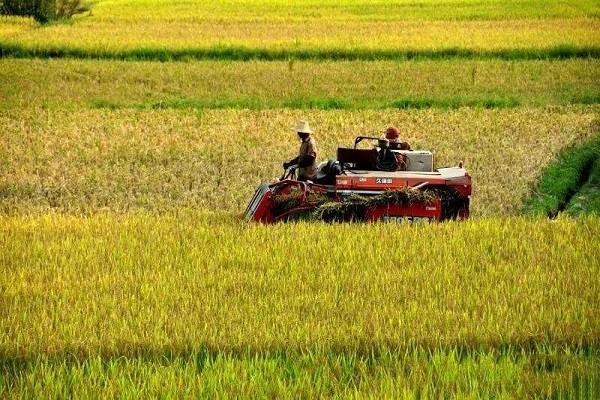 好消息:2019年大部分农民朋友将享受三大补贴!三大扶持!