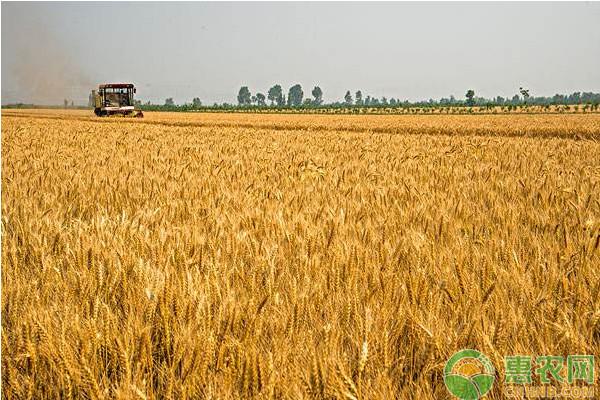 2019年秋冬季小麦病虫害防控指导意见