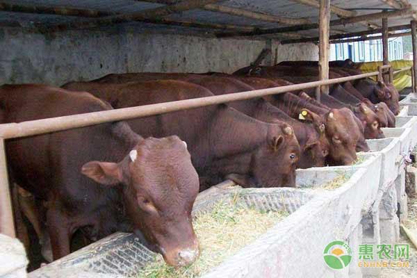 养羊课堂:牛群四季的防疫管理要点