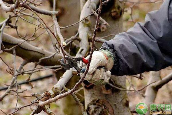冬季果树休眠期