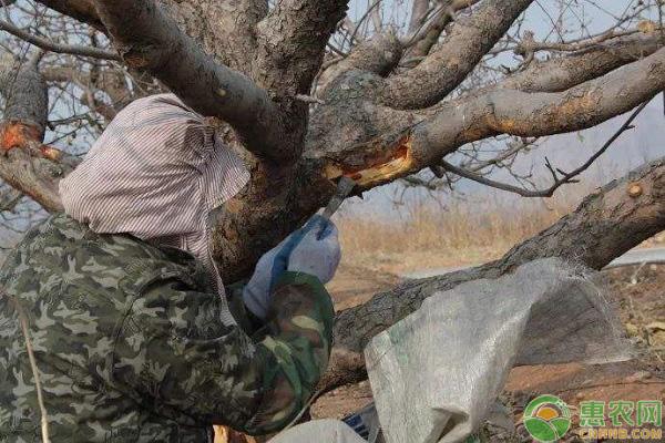 冬季果树休眠期管理要点