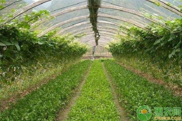 冬季大棚蔬菜管理要点和注意事项