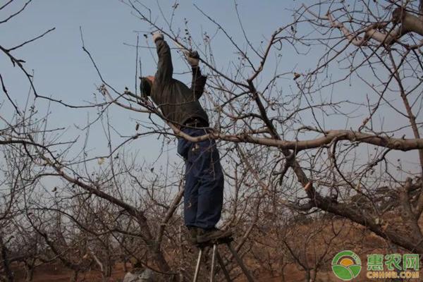 果树越冬管理