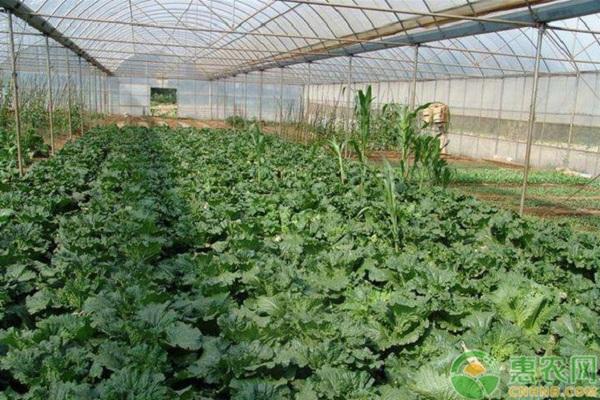 种植课堂:农作物常见肥害类型介绍