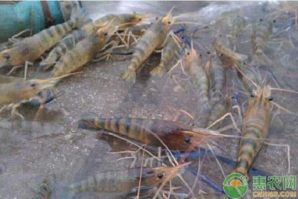 冬季鱼塘管理需要注意哪些方面?教你四招安全越冬!