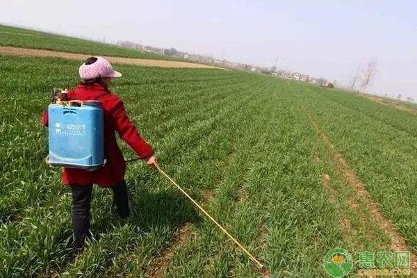 冬季小麦除草剂