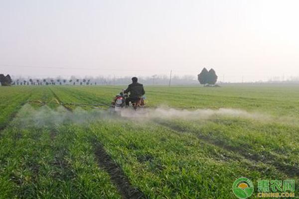冬季小麦除草剂使用时间