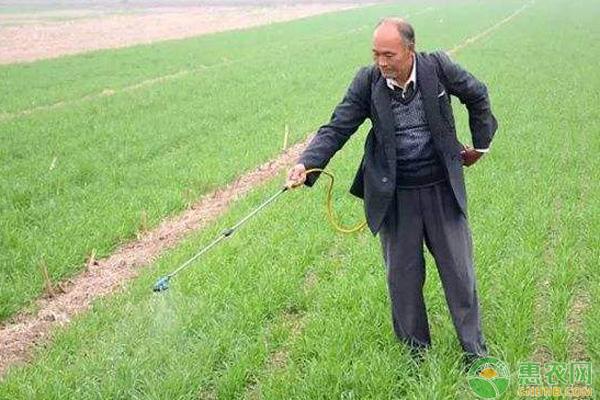 冬季小麦除草剂使用方法
