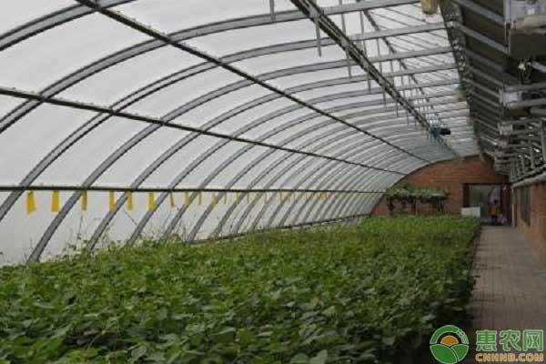 蔬菜根系老化是什么原因?冬季如何解决蔬菜生长缓慢问题?