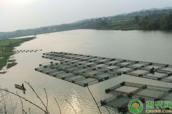 12月水产管理