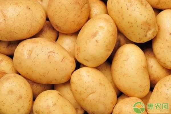 马铃薯套种的原则是什么?与其他作物有哪些套种模式?