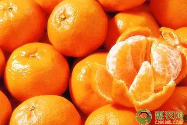 为什么砂糖橘果