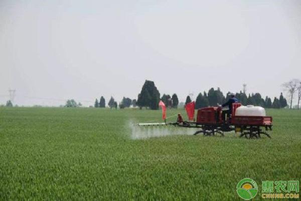 小麦冬前除草药剂选择