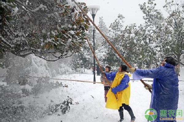 园林积雪处理要点