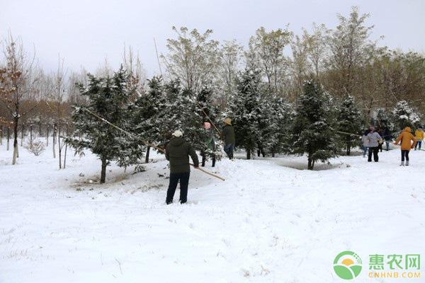 园林积雪处理方法