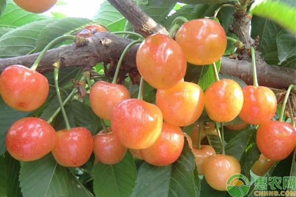 果园有机肥的正确使用方法