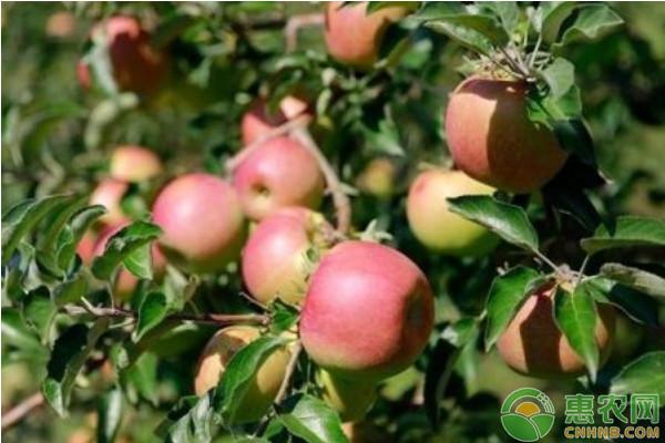 果园杀虫剂