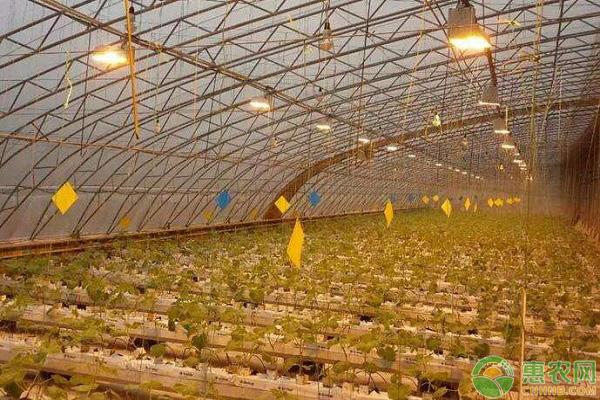 冬季温室大棚增光的方法