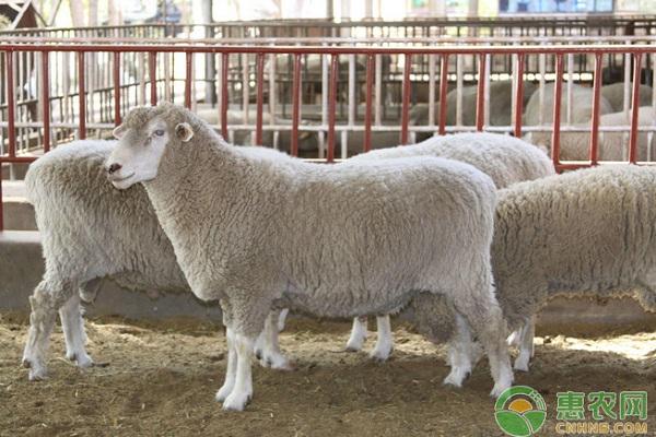 养羊课堂:四种常见羊舍优缺点对比