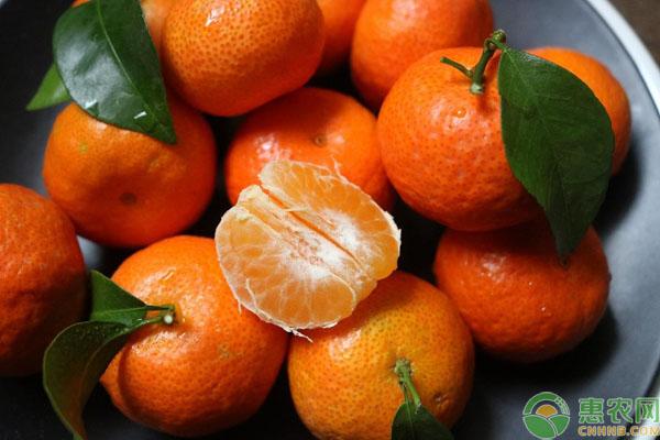 砂糖橘管理技术