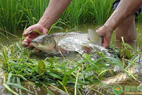 渔稻综合种养