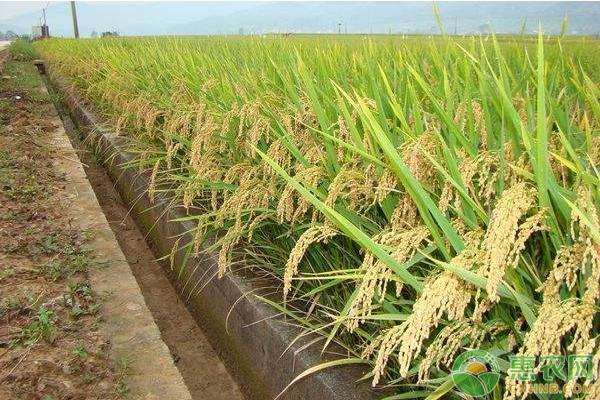 水稻施肥时间和施肥方法