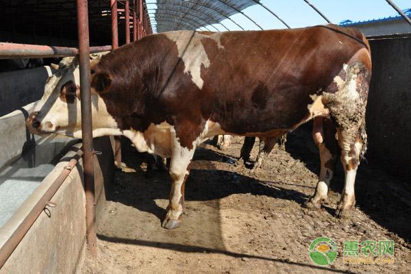 母牛难产的原因及解决方法