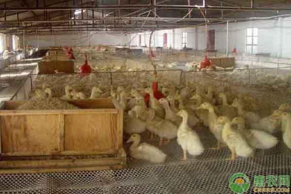 养殖场消毒要点