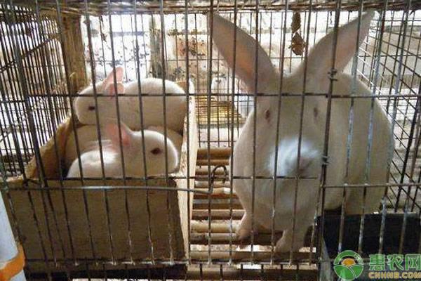 特种养殖:养兔常见的五大误区