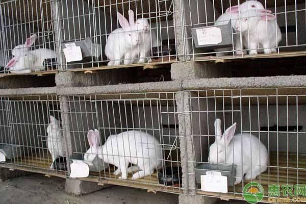 养殖兔子有哪些禁忌?这八点新手必看!