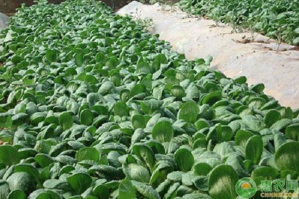 2020年春天可以种植什么蔬菜?(附春季蔬菜种植注意事项)