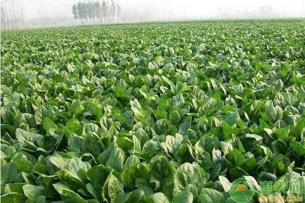 每年二月份可以种什么蔬菜?(附2月蔬菜种植指南)
