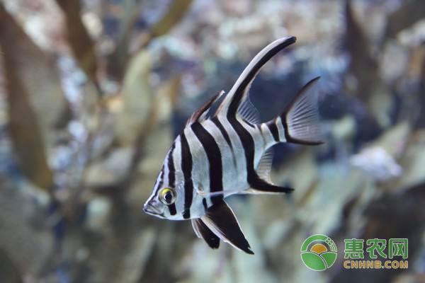 热带鱼水温多少合适?养殖热带鱼注意要点